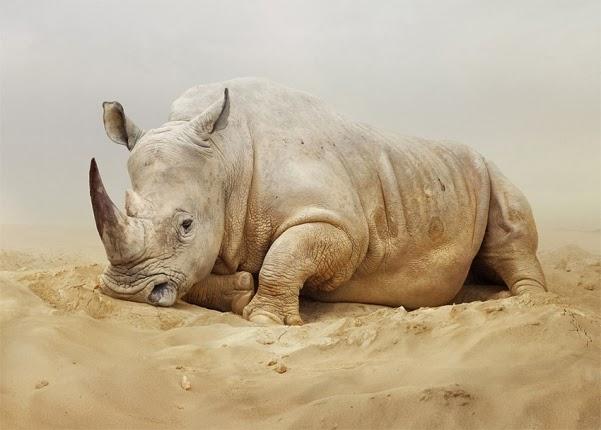 fabulosas fotografias de animales