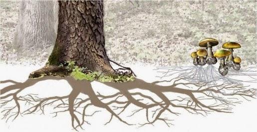 Los Árboles se Comunican e Incluso se Protegen de los Depredadores