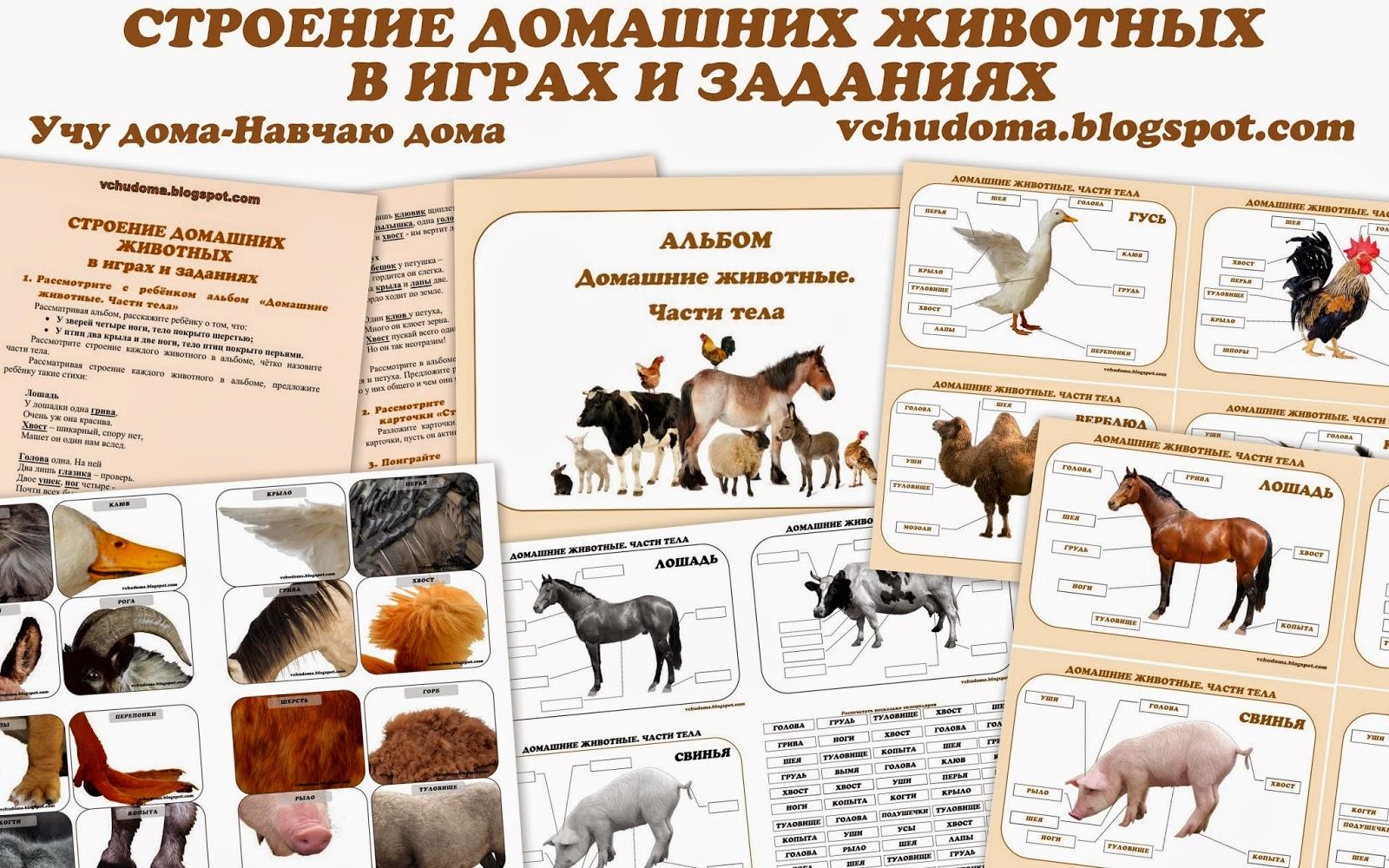 Текст про кузнечика на башкирском языке