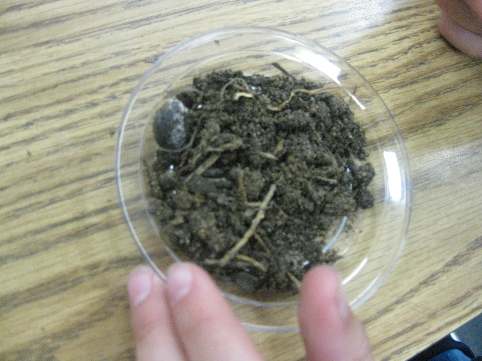 Third grade thinkers science investigation a soil study for Soil investigation