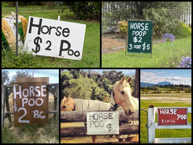 Horse+Poo.jpg