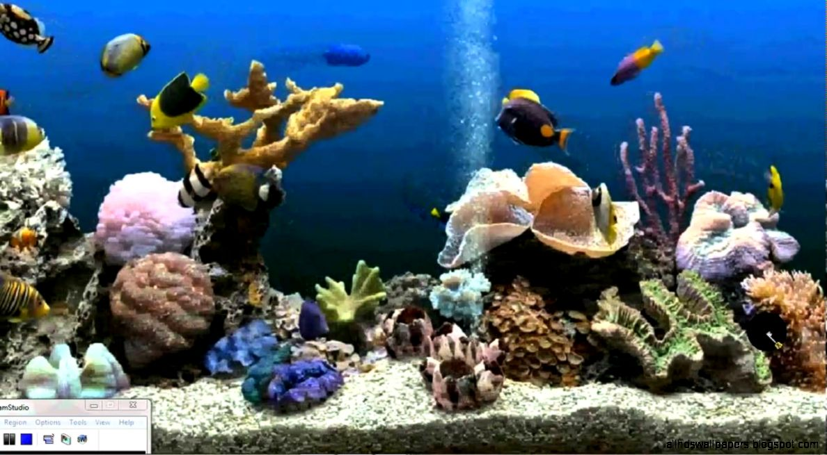 How to get an Aquarium as your Desktop Background Xp Vista
