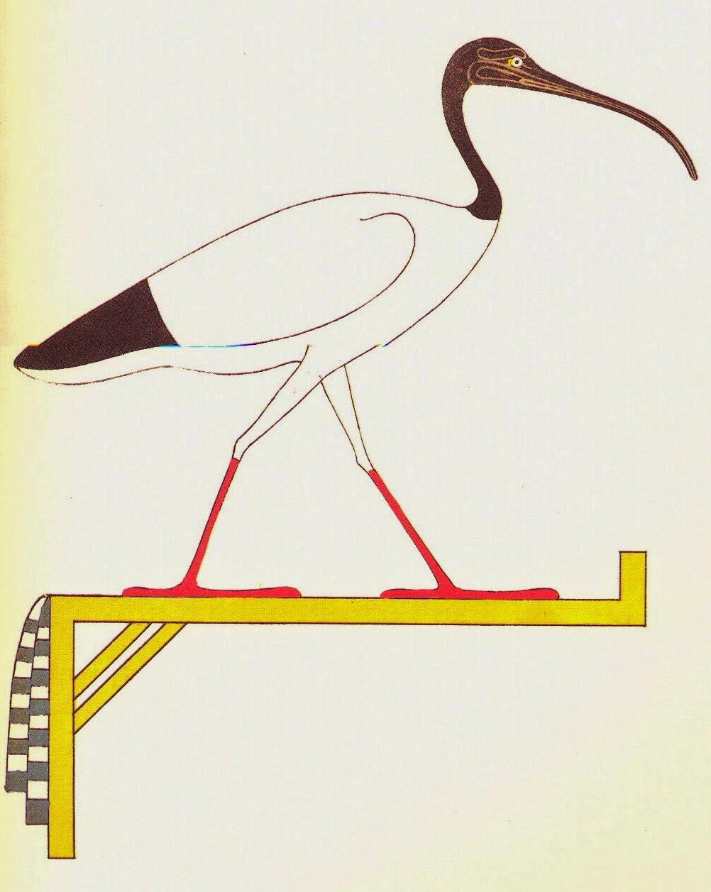 Thot-Ibis