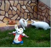 Моите зайци