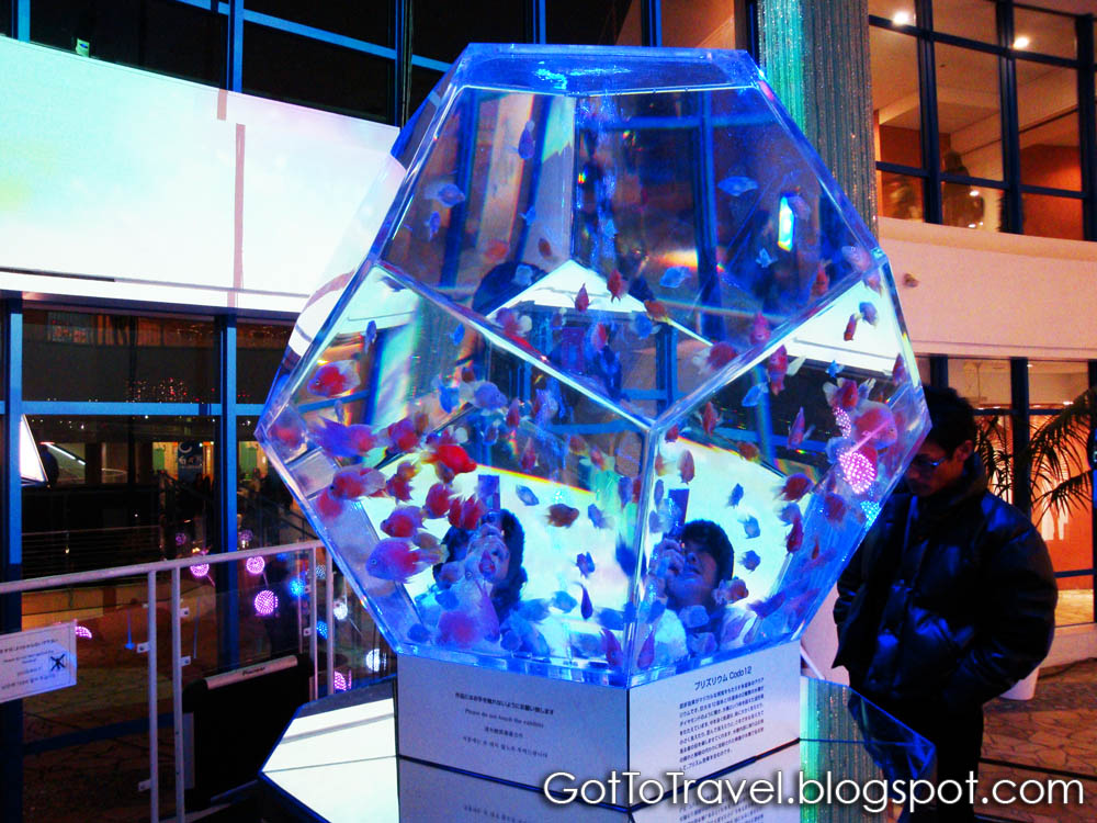 Cool fish tanks on pinterest fish tanks aquarium and for Awesome fish tanks
