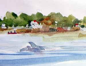 Dolphins, Hilton Head Island