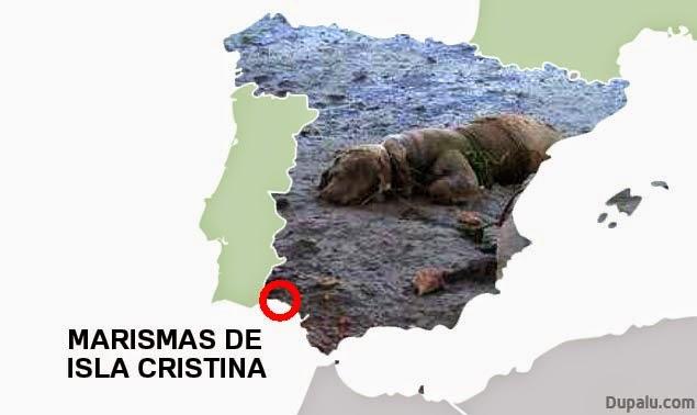 Marismas de isla Cristina (Huelva)