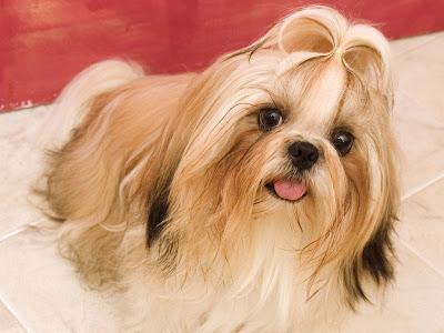 Popular Wallpaper Black Adorable Dog - Beautiful+girl+favrit++dog+hd+Wallpapers  You Should Have_62897  .jpg