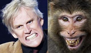 Funny Animals Look Like People
