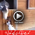 Goat Eaten by Horse – A Funny Clip