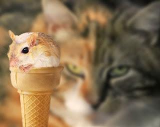 cat and rat wallpaper