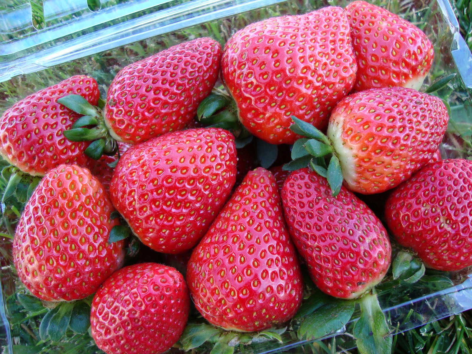 produce clerk the produce clerks handbook by rick chong good quality fresh strawberries in a clamshell