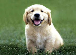Choosing Best Dogs For Kids Information golden retriever