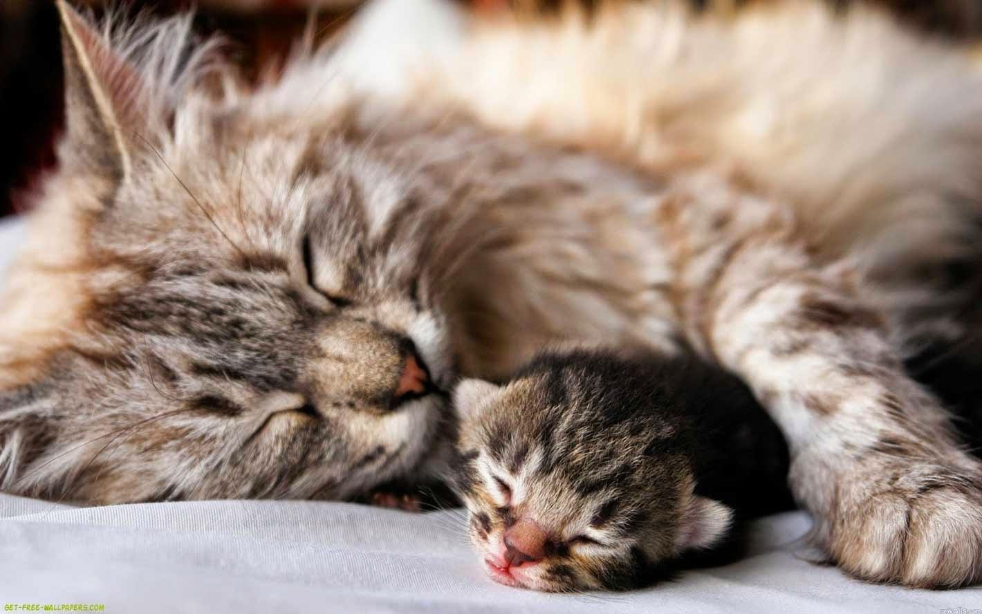 Adorable Cats Love Wallpaper