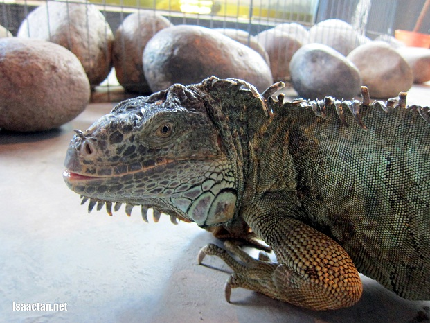 True Discovery Reptile Farm Showcase