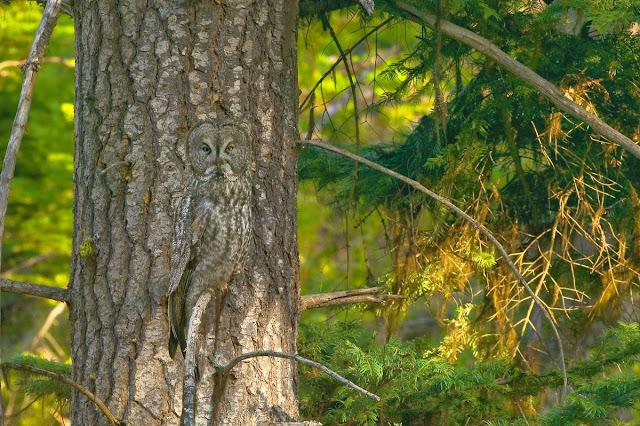 A arte da camuflagem - ache os animais camuflados nas fotos