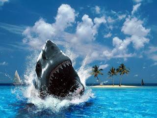 shark action shot wallpaper Wallpaper Computer Desktop