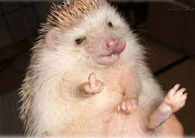 Up yours hedgehog