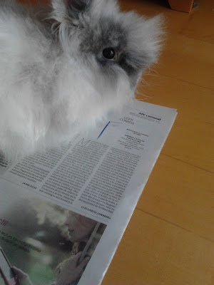 Rabbit Reading