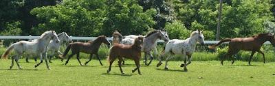 prairie corner farm horses