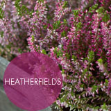 HEATHERFIELDS project