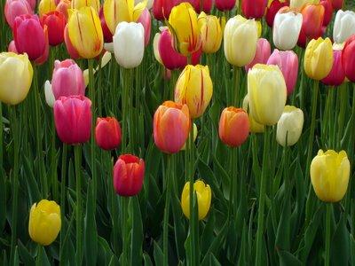 Gambar Bunga Hias
