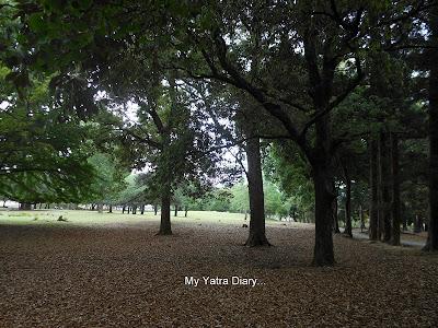Nara Park, Japan