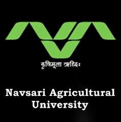 Navsari Agricultural University Recruitment for SRF posts 2017
