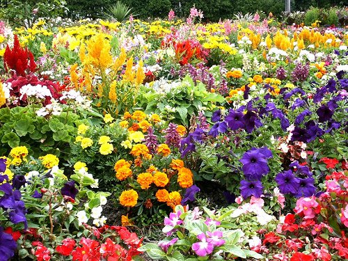 ... Thought Of Planting Flowers With Our Words And Deeds Instead Of Weeds,  Maybe, Just Maybe, The Whole World Would Be A Beautiful Flower Garden Of  People.