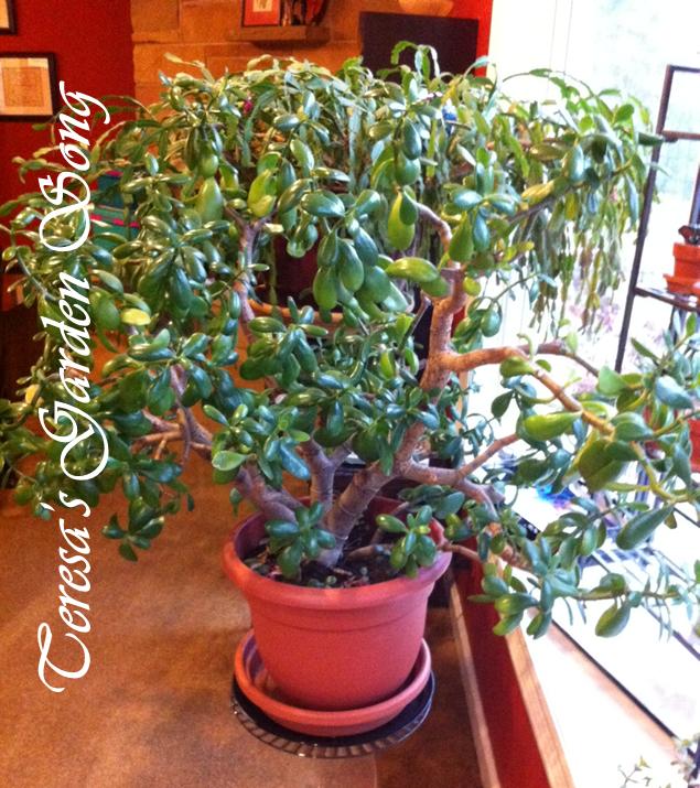 Teresa 39 S Garden Song Myths About Succulents
