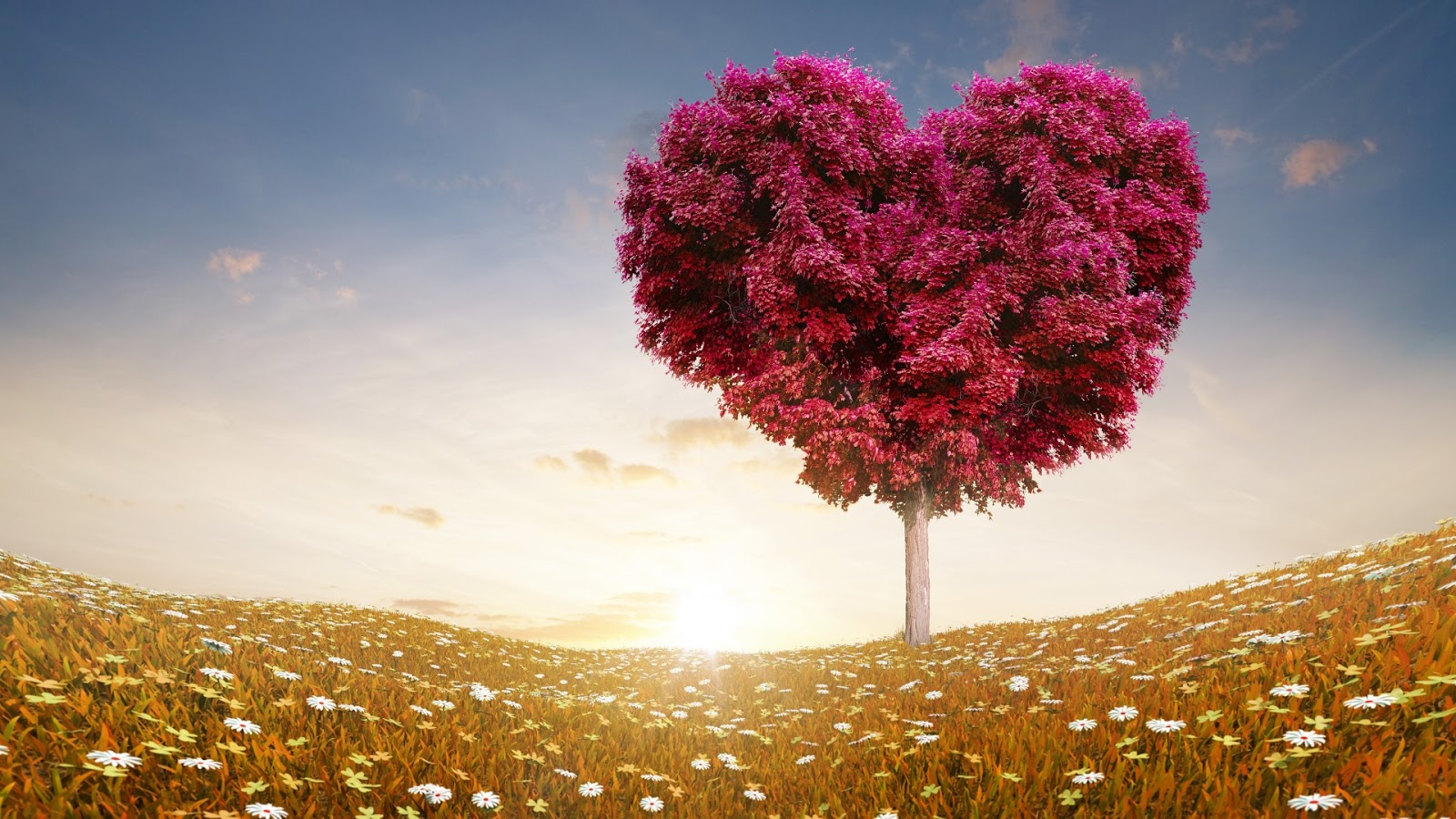 Love Heart Tree Fields 1920x1080 Wallpaper