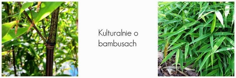 Bambusy w Polsce - wszystko o bambusach do ogrodu i donicy