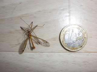 mosquito euro