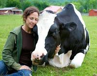 Dylan - Resgatado da indústria de laticínios pelo santuário de animais Woodstock