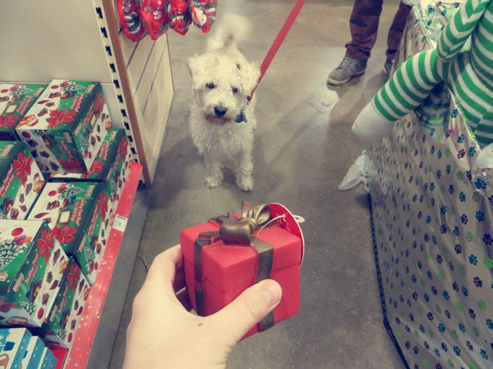 pets at home christmas present