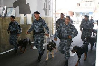 POLICIAIS E CÃES DO CANIL DO BPChq