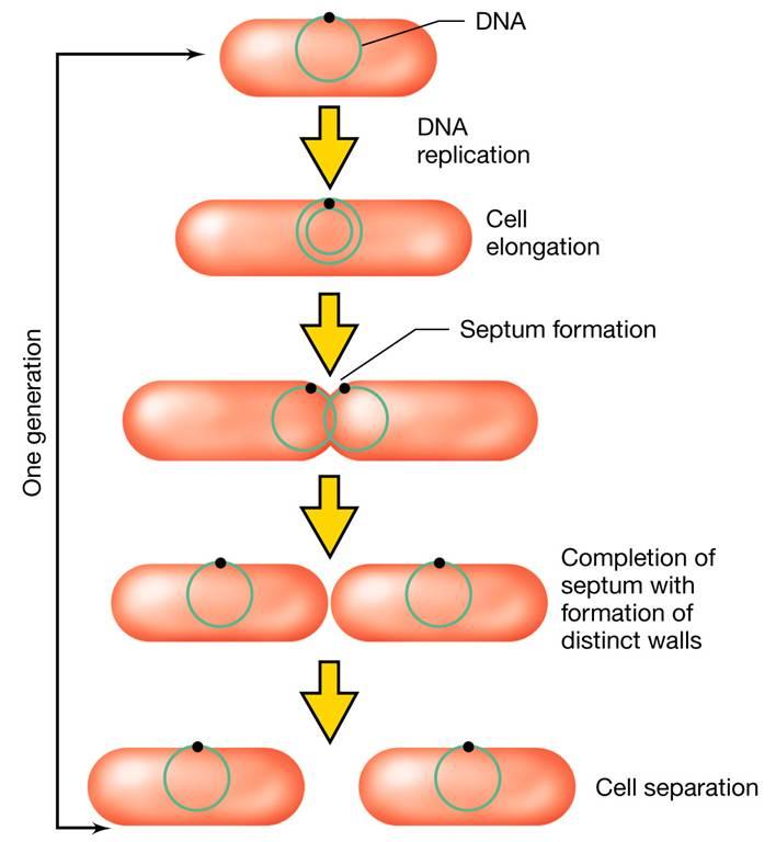 comunicazione cellulare