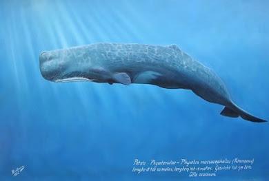 我最喜歡的海洋生物