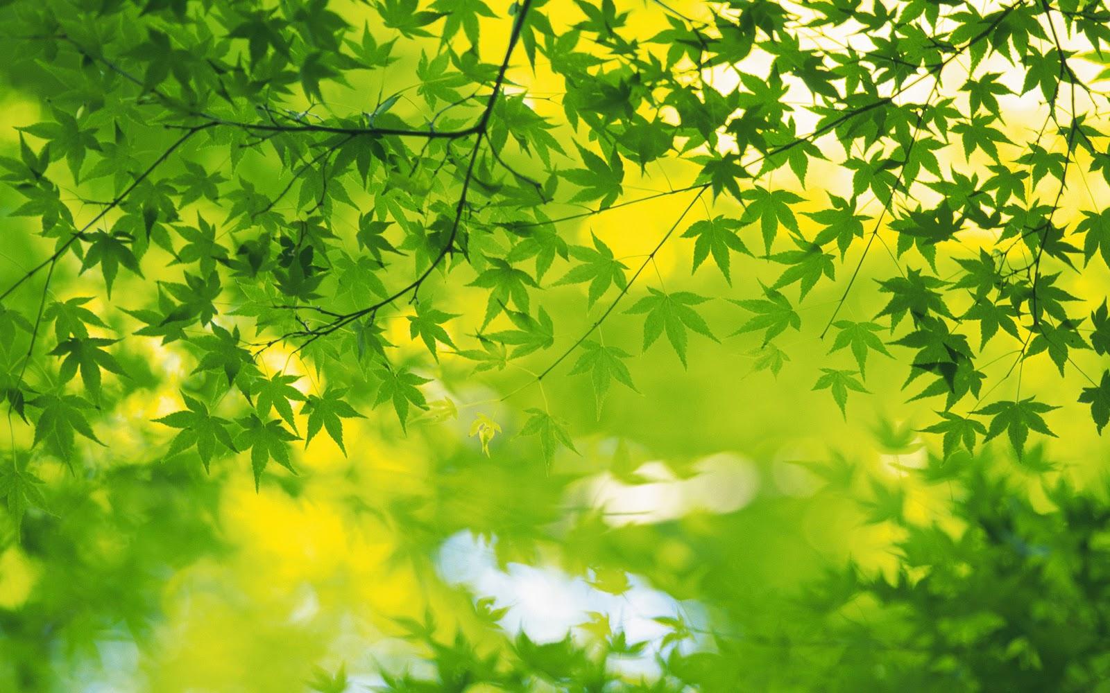 Groene Achtergronden | HD Wallpapers: wallpapers-achtergronden.blogspot.com/2011/02/groene-achtergronden...