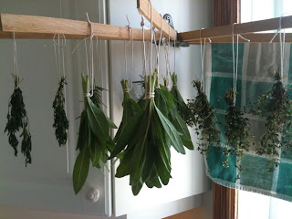 Ollie's Yummy in Your Tummy: How to Dry Herbs