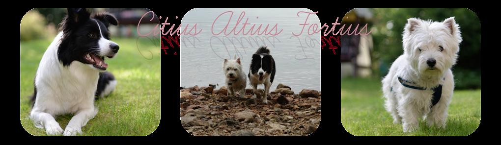 Citius Altius Fortius | treeniblogi