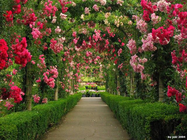 caramanchão de folhas verdes e flores rosas e vermelhas