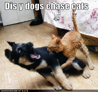 Funny pictures of cats and dogs0