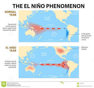 cliff mass weather and climate blog a strong el nino develops what does this mean for the. Black Bedroom Furniture Sets. Home Design Ideas