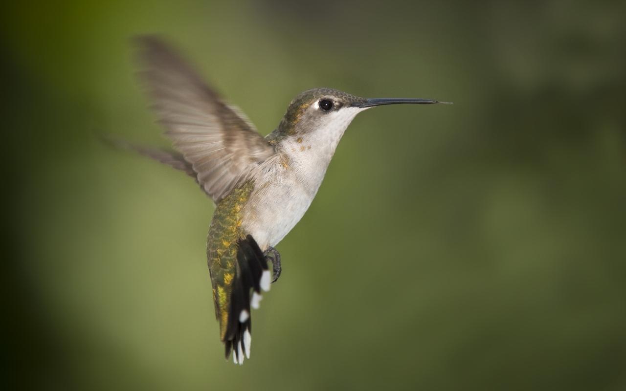 http://3.bp.blogspot.com/-YkRIHZHlpwE/T1iHb8D4SWI/AAAAAAAAAqg/-_qSrBSIYGg/s1600/hummingbird-texas_1280x800_499.jpg