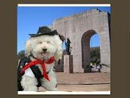 Pet Shops em Porto Alegre
