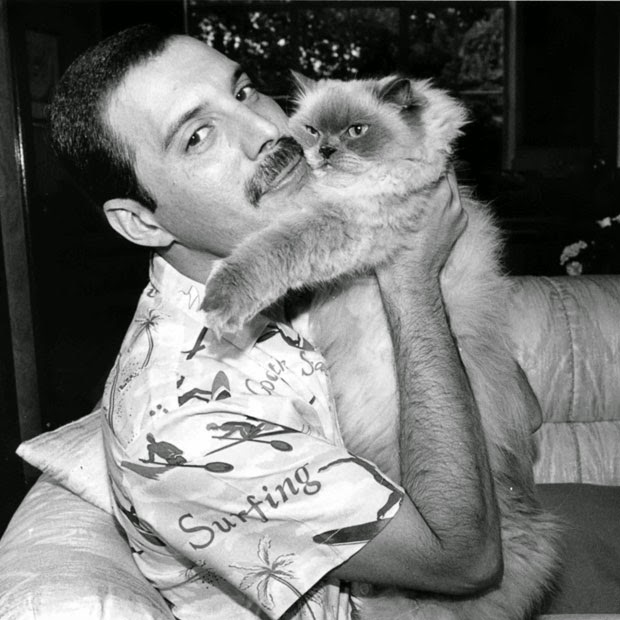 Freddie and a cat