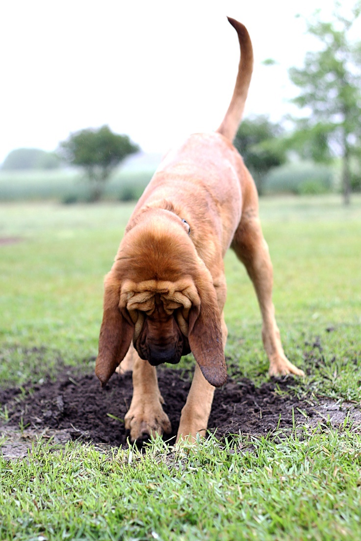 how to train a dog not to dig