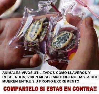 animales vivos llavero