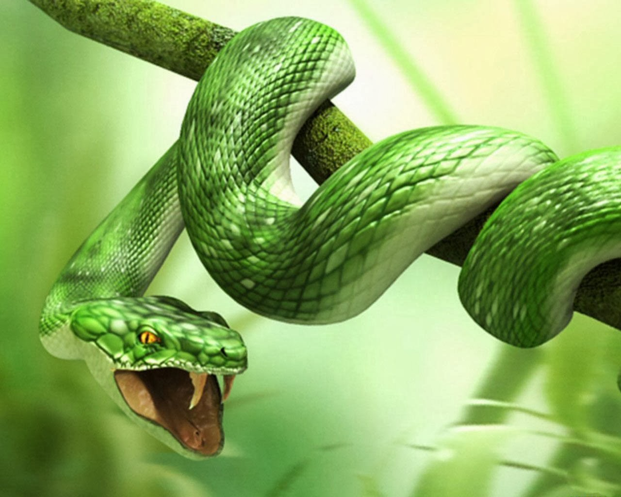 3d animal snake & tiger hd wallpapers | full hd desktop wallpaper